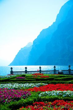 Lake Garda, Italy | To learn more about #Verona click here:            	 http://www.greatwinecapitals.com/capitals/verona