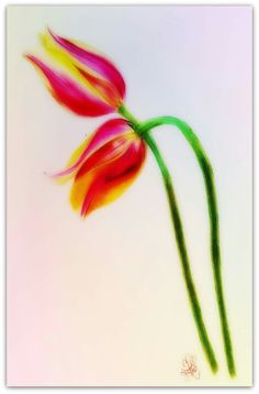 """Prismacolor drawing. Nothing says """"I love you"""" like tulips. #Prismacolor.  #tulips.  #Drawing.  #Colorpencil art"""