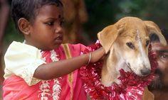 你覺得印度少女嫁狗很「變態」,是否外國人也覺得你喝符水治病很「愚蠢」? - The News Lens 關鍵評論網