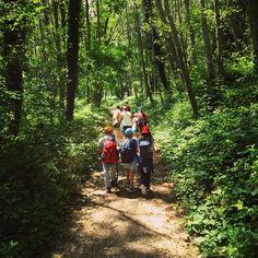 #camminiamo nel fresco dei bosco campi #CUSpisa #cusjunior