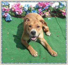 JACE-FRIENDS OF SHELTER ANIMALS FOR COBB COUNTY1060 Al Bishop Drive Marietta, GA 30008 ckersey533@aol.com