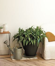 There are five dracaena (from the supermarket) repotted into this cone-shaped planter, creating an abundant, exotic feel.