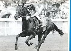 Love The Groom(1984)Blushing Groom- Nell's Briquette By Lanyon. 3x5 To Nasrullah, 5x5 To Bull Dog. 12 Starts 4 Wins 2 Seconds 2 Thirds. $154,458. Won King Edward VII S(Eng-2), Gordon S(Eng-3), 2nd Premio Presidente Delia Repubblica S(Ity-1), Premio Tesio S(G3), 3rd Grand Premio Di Milano S(Ity-1), Futurity S(Eng-1).