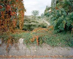 GREY GRASS : DIEGO MAYON