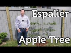 New Fruit Trees Espalier Small Spaces 27 Ideas Espalier Fruit Trees, Fruit Tree Garden, Garden Trees, Small Space Gardening, Small Garden Design, Organic Gardening, Gardening Tips, Vegetable Gardening, Fruit Party