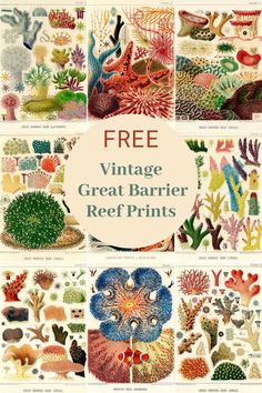 A stunning collection of vintage Australian Great Barrier Coral Reef Illustrations and prints by the marine biologist William Saville-Kent free to print. Vintage Prints, Vintage Posters, Octopus Illustration, Hard Coral, Coral Art, Free Printable Art, Free Printables, Life Poster, Art Journal Pages