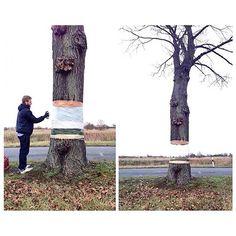 #illusion #art #streetart #urbanart #instaart #suspended #tree