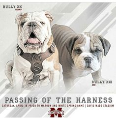 . Mississippi State Bulldogs Football, White Springs, State University, Bullying, Fur Babies, Postcards, French Bulldog, Ms, Puppies