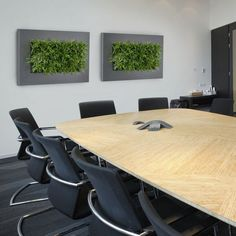"""When someone mentions """"Green Walls"""", the first thing that springs to mind is probably those enormous full wall murals up in only the most elite buildings. Indoor Office Plants, Indoor Plants, Eco Green, Green Art, Green Office, Green Environment, Live Picture, Real Plants, Plant Wall"""