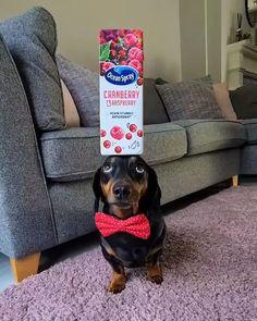 Dog Treats, Like You, How Are You Feeling, Feelings, Funny, Dogs, Adorable Animals, Pets, Gatos