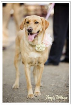 Bella boo - best wedding dog ever!
