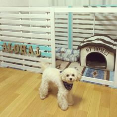 Bedroom/DIY/3Coins/犬小屋/犬のゲージ/すのこDIY...などのインテリア実例 - 2017-04-09 07:09:21