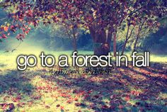 Go to a forest in fall.