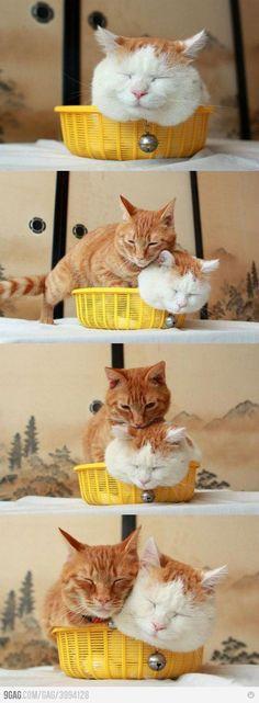 kitty #cats