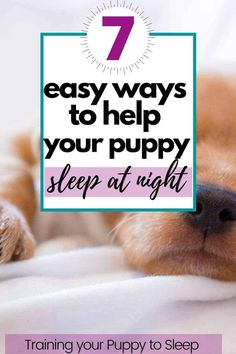 Easily help your puppy sleep through the night. Puppy Schedule, Puppy Training Schedule, Training Your Puppy, Big Dog Little Dog, Puppy Stages, New Puppy, Yorkie Puppy, Chihuahua, Sleeping Puppies