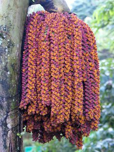 can I find the colors to do this in bead crochet?  Palm inflorescence