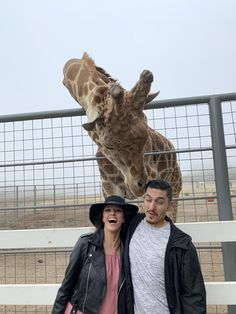 Malibu Wine Safari and Beer Garden Malibu Wine Safari, Malibu Wines, Beer Garden, Giraffe, Animals, Felt Giraffe, Animaux, Animal, Animales
