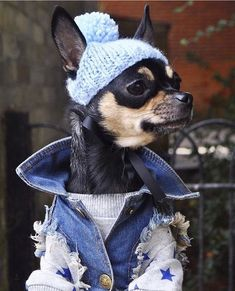 Popular Dog Accessories January 14 is National Dress Up Your Pet Day!Popular Dog Accessories January 14 is National Dress Up Your Pet Day! Chihuahua Love, Chihuahua Puppies, Dogs And Puppies, Chihuahuas, Funny Animals, Cute Animals, Puppy Drawing, Pet Day, Dog Sweaters