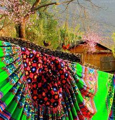 hoa dao Ha Giang