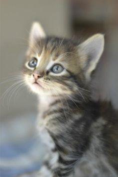 Qu'y a-t-il de plus mignon qu'un chaton, à part un autre chaton ?