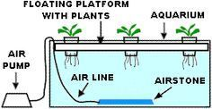 12 Creative and Innovative Homemade Hydroponics Systems | The Self ...