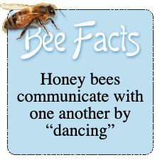 Facts About Bees - Bing Images