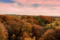 https://flic.kr/p/zvpv26 | 302/365. Colors have arrived in Holland and we had beautiful light. Kaapse Bossen Doorn Utrechtse heuvelrug. Standing on top of the observation tower.