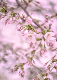 """Spring color."" by Sasaki Tomohiro, via 500px."