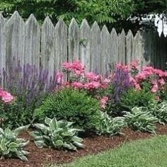 Formal flower bed with salvia, pink roses, boxwood, and hostas in front of picket fence. Follow @gardenapproved by kay #flowerbedgardening #landscapingandoutdoorspaces #FenceLandscape