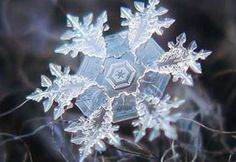 a perfect snowflake Types Of Photography, Macro Photography, Travel Photography, Worlds Largest Dog, Snowflake Photography, Image Zen, Snowflake Pictures, Art Et Nature, Nature Pics