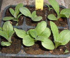 Lavori di primavera - Coltivare l'orto