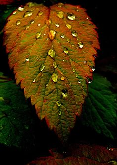 leaf with water droplets. Dew Drops, Rain Drops, I Love Rain, Drip Drop, Water Art, Water Droplets, Leaf Art, Macro Photography, Levitation Photography