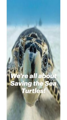Crazy Facts, Weird Facts, Save The Sea Turtles, Turtle Conservation, San Diego Beach, Ocean Creatures, Environmental Science, Ocean Life, Marine Life
