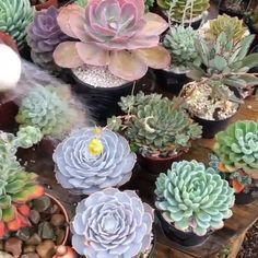Flores Discover Hydrate those succulents! For how-tos tips and tricks and inspiration on all things succulents. check out our website for some helpful articles to encourage you to be the best succulent gardener! Succulent Landscaping, Succulent Gardening, Succulent Care, Succulent Terrarium, Gardening Tips, Propagating Succulents, Cacti And Succulents, Planting Succulents, Cactus Plants