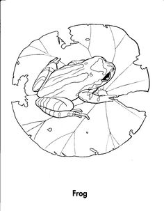 wood frog coloring pages - photo#3