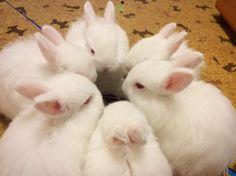 「兔子員工」用餐時間圍一圈 網友:在偷聊奧客八卦? | ETtoday寵物動物新聞 | ETtoday 新聞雲