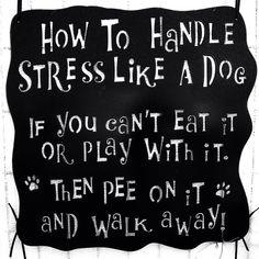 How to handle stress like a dog.