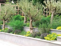 Pictures of Mediterranean-Style Gardens and Landscapes | DIY Garden Projects | Vegetable Gardening, Raised Beds, Growing & Planting | DIY