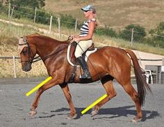 Understanding what it really means when the horse is 'on the bit' is probably the most important thing you can learn about riding.