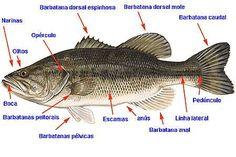 .:: Classsificação dos Peixes - Só Biologia ::.