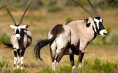 The wildlife at Bushmans Kloof