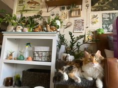 Fantasy Suites, Room With Plants, Grunge Room, Aesthetic Bedroom, Bedroom Inspo, New Room, Room Inspiration, Room Decor, Room Ideas