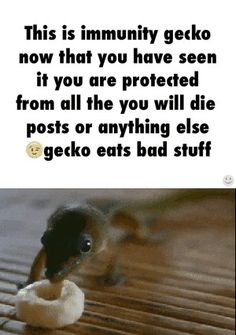 "Immunity Gecko protects you from stupid ""you will die"" posts. Immunity Gecko eats all the bad things. Funny Quotes, Funny Memes, Hilarious, Teen Quotes, Immunity Cat, 5sos, And So It Begins, Random Stuff, Cool Stuff"