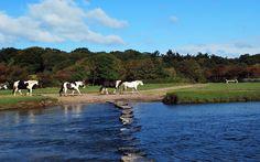 Horses, River Ogmore, Ogmore-by-Sea, Vale of Glamorgan, Wales - ynysforgan_jack Flicker