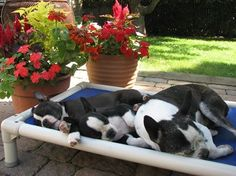 ::: Love the doggie bed. big enough for all. Lorr