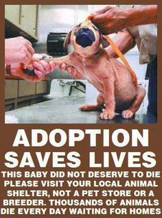 This puppy was killed.  Let's stop this from happening by spaying, neutering, and adopting!!!