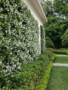 8 Beaming Clever Tips: Backyard Garden Kids Fence backyard garden pergola arbors.Backyard Garden On A Budget Retaining Walls. Privacy Landscaping, Backyard Privacy, Backyard Fences, Garden Landscaping, Landscaping Ideas, Privacy Shrubs, Fence Garden, Pool Fence, Garden Pool
