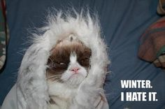 But Why So Grumpy !? Here Are 20 Funny Grumpy Cat Pics!