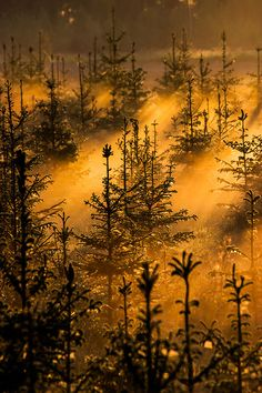 """wowtastic-nature: """" 💙 untitled on by Marko Häkkinen, Finland ☀ Canon EOS """" Canon Eos, Beautiful World, Beautiful Places, Vida Natural, Misty Forest, Voyage Europe, Nature View, Travel Photos, Mists"""