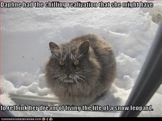 Daphne had the chilling realization that she might have to rethink her dream of living the life of a snow leopard.